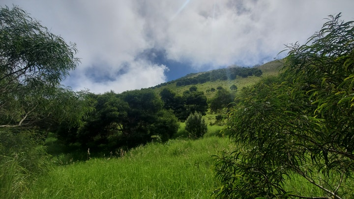 Benefits of Native Reforestation for Hawaiian Ranches