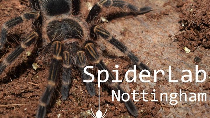 Ye Olde Arachnarium: Developing Spider Science