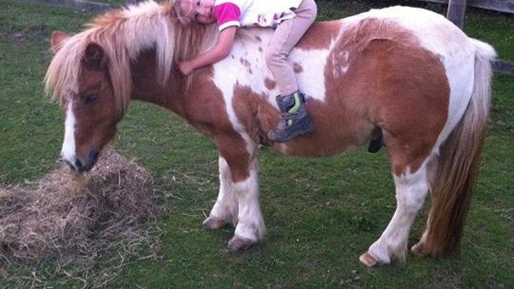 Help us get H.E.R.D. cantering