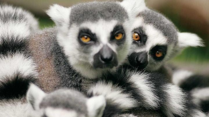Project Madagascar 2019 - Protecting the Iaroka Forrest