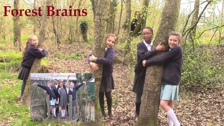 Forest Brains