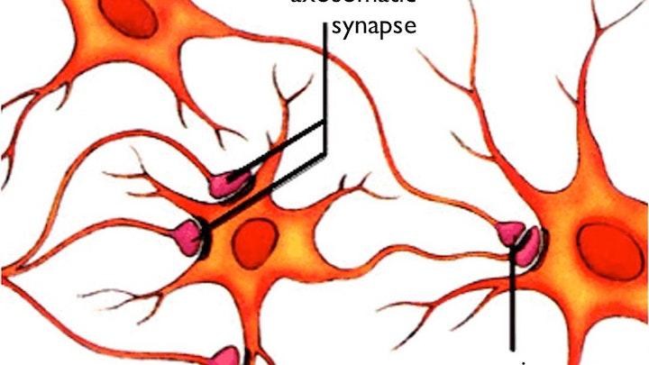 Neuroscientific Approach to ME/CFS